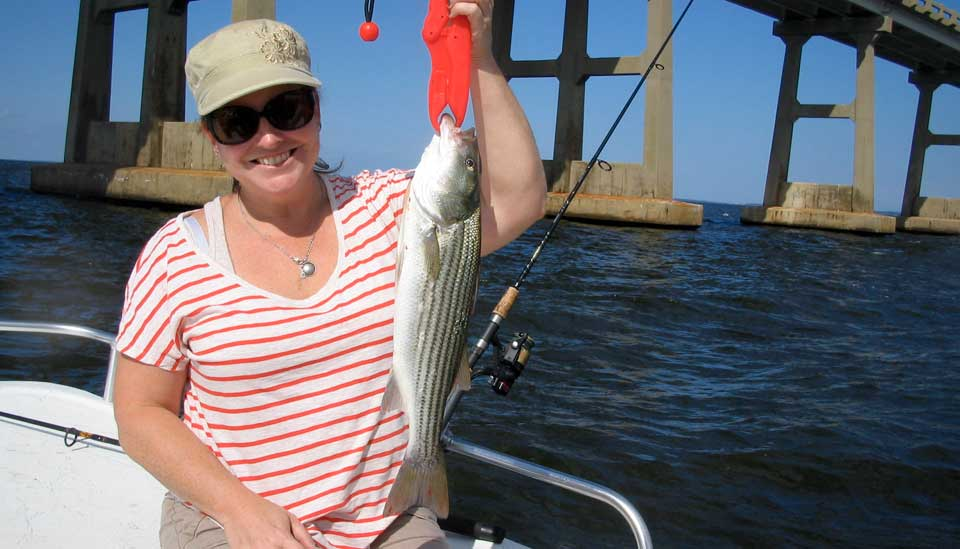 Outer banks fishing report 4 oct 2014 for Outer banks sound fishing