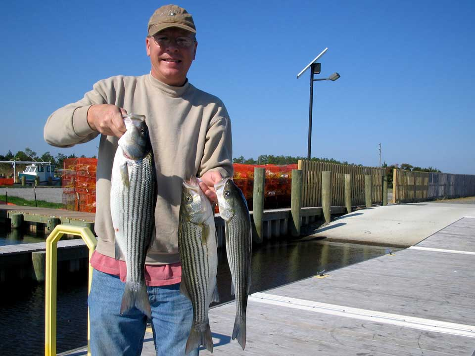 Outer banks fishing report 25 oct 2014 am for Striped bass fishing reports