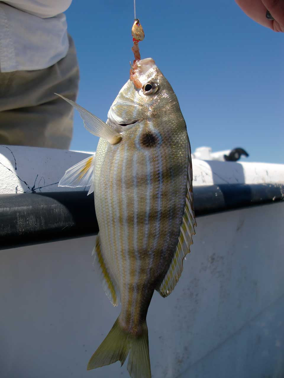 Obx Fishing Recreational By Catch Soundside Adventures