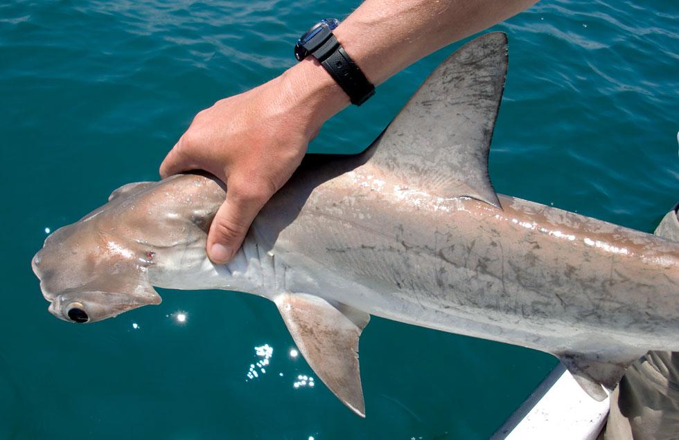 Outer Banks Sharks Soundside Adventures